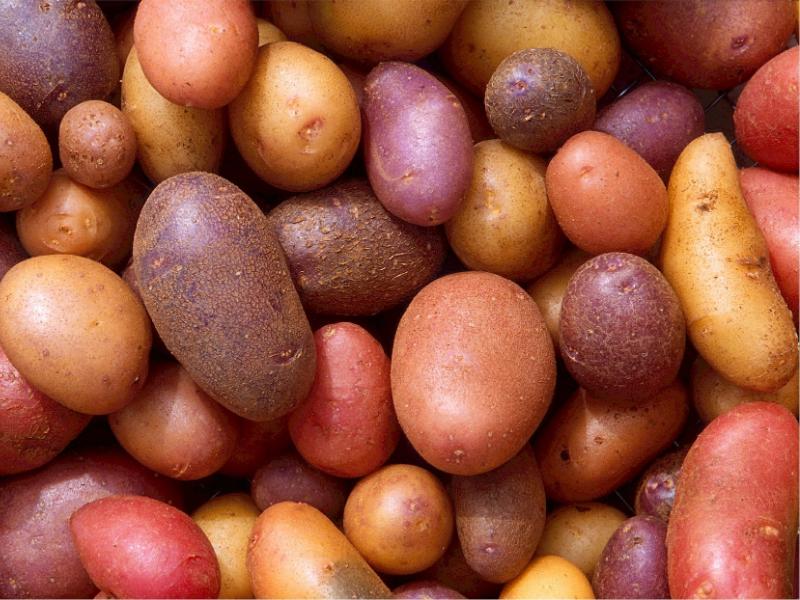 Colorful Rainbow Potatoes